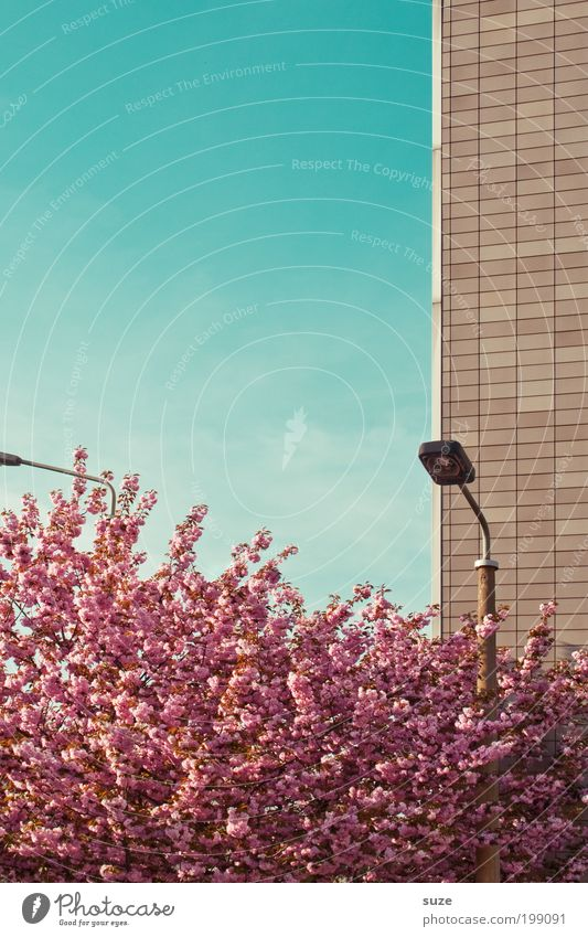 Sky Nature Blue Plant Tree Environment Wall (building) Spring Blossom Pink Facade Growth Esthetic Bushes Beautiful weather Change