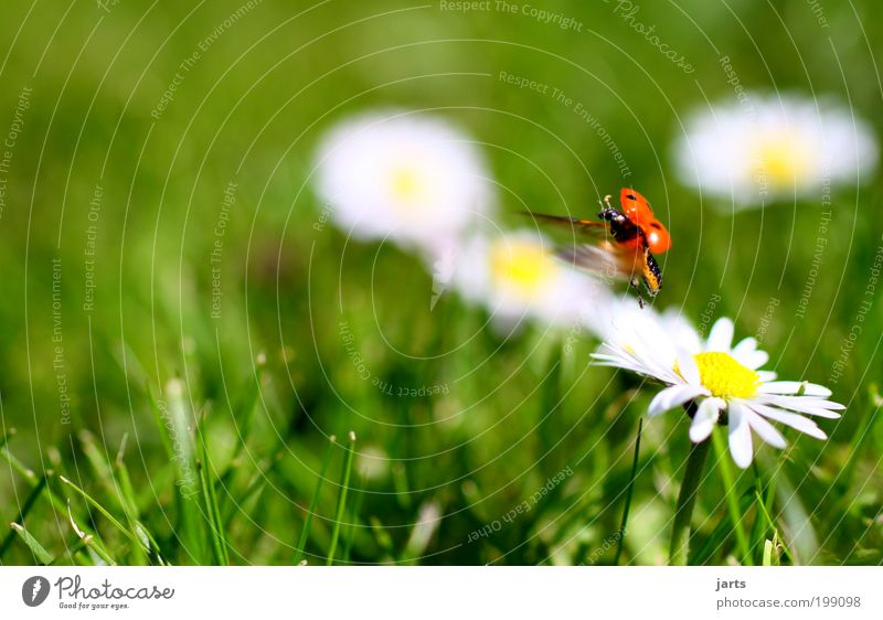 Nature Animal Spring Meadow Joie de vivre (Vitality) Beautiful weather Beetle Ladybird Insect