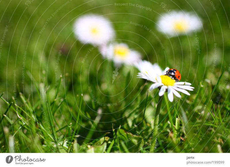 Time to... Nature Spring Flower Grass Garden Meadow Wild animal Beetle 1 Animal Free Serene Idyll Calm Ladybird jarts Colour photo