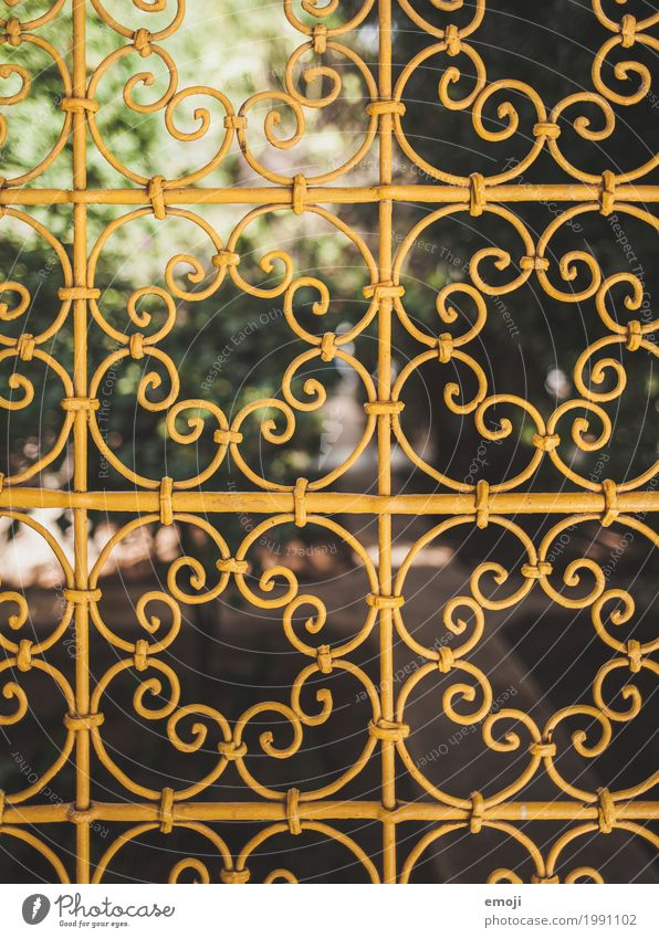 lattice Nature Summer Beautiful weather Park Grating Ornamental Yellow Kitsch Colour photo Exterior shot Detail Pattern Deserted Day Shallow depth of field