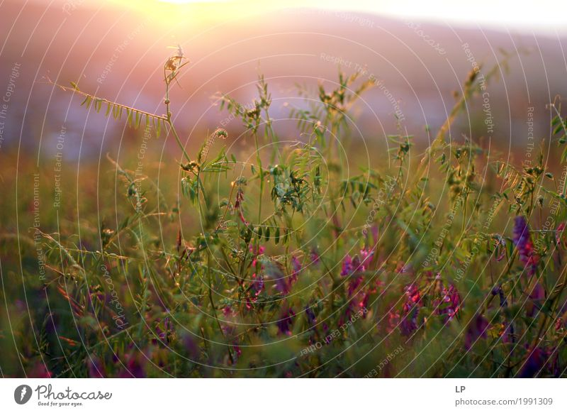 spring flowers during sunrise Lifestyle Wellness Harmonious Well-being Contentment Senses Relaxation Calm Vacation & Travel Trip Far-off places Summer vacation