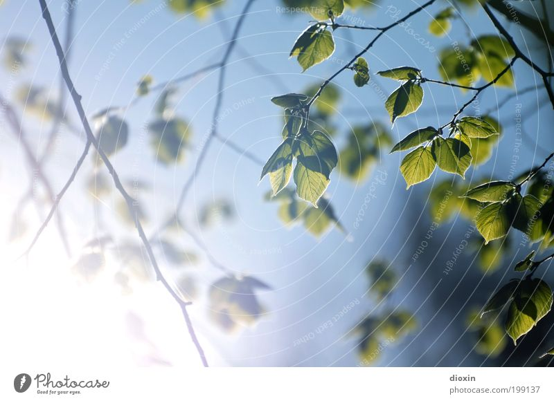 Sky Nature Blue White Green Tree Plant Sun Leaf Environment Spring Garden Bright Park Climate Growth