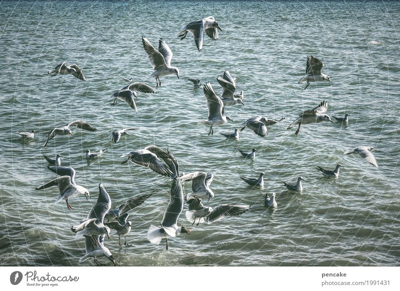 hidden object Nature Landscape Elements Water Beautiful weather Waves Lake Wild animal Bird Flock Flying Swimming & Bathing Gull birds Seagull To swarm Many