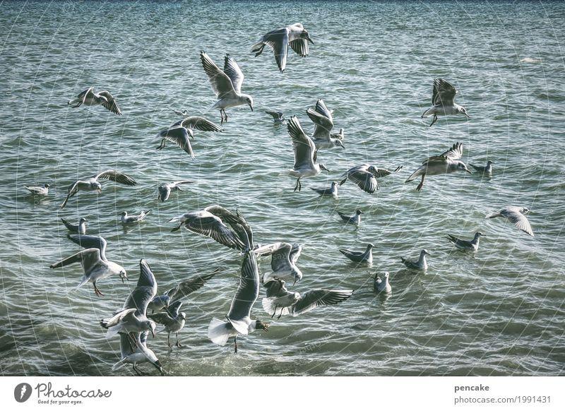 Nature Water Landscape Lake Swimming & Bathing Bird Flying Waves Wild animal Beautiful weather Elements Flock