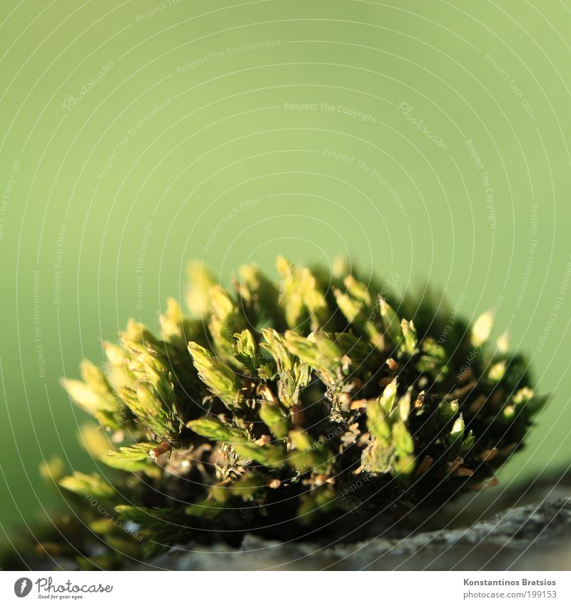 Nature Beautiful Green Plant Spring Garden Park Bright Small Growth Round Soft Middle Illuminate Moss Bushy