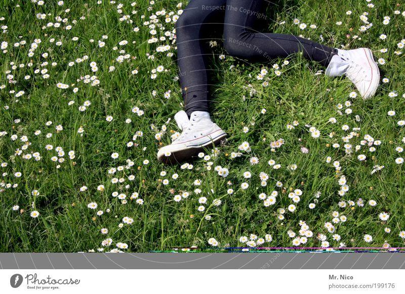 daisy run Jogging Hiking Youth (Young adults) Legs Feet Environment Nature Spring Summer Plant Grass Garden Meadow Walking Lie Running Jump Dream Joy