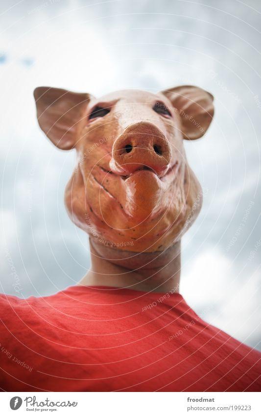headcheese Carnival Hallowe'en Masculine Mask Animal Animal face Swine Trashy Arrogant High spirits Whimsical Joy Dress up Swinishness Lewd Disgust Creepy Sow