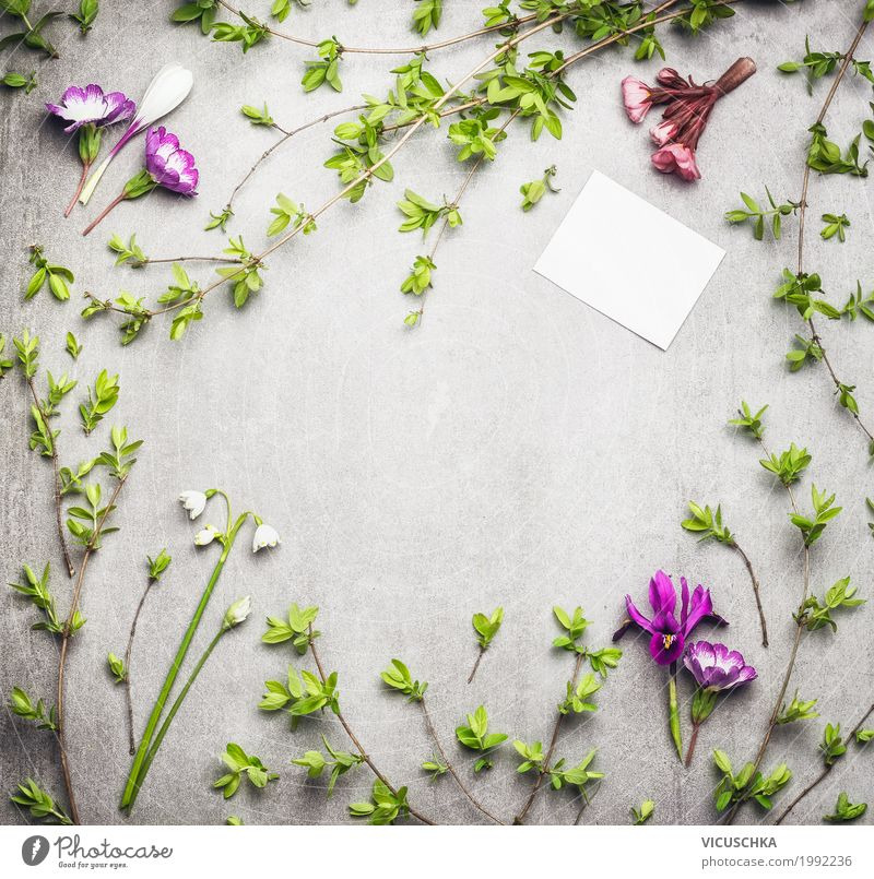 Spring nature frame with spring branches and flowers Style Design Summer Garden Nature Plant Flower Grass Bushes Leaf Blossom Foliage plant Blossoming Love