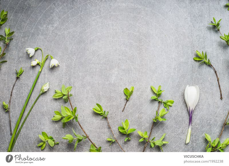 Spring flowers and branches background Style Design Nature Plant Flower Leaf Blossom Decoration Bouquet Pure Background picture Spring colours Spring crocus