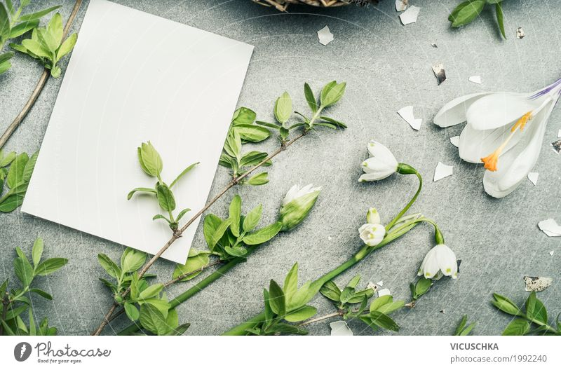 Spring flowers and twigs and empty white card Style Design Living or residing Garden Valentine's Day Nature Plant Flower Leaf Blossom Love Background picture