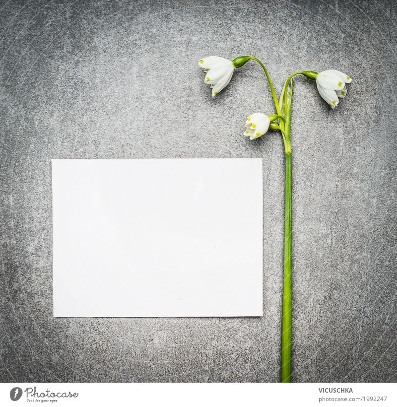 Empty white card with lily of the valley Lifestyle Style Design Garden Feasts & Celebrations Mother's Day Nature Plant Spring Flower Leaf Blossom Decoration