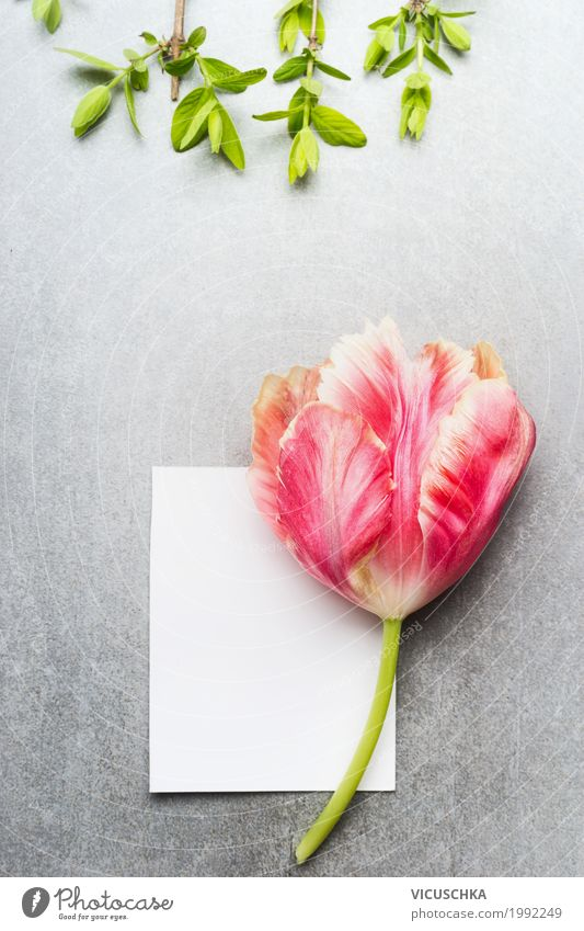 Empty white card with tulip Lifestyle Style Summer Feasts & Celebrations Valentine's Day Mother's Day Birthday Nature Plant Spring Tulip Leaf Blossom