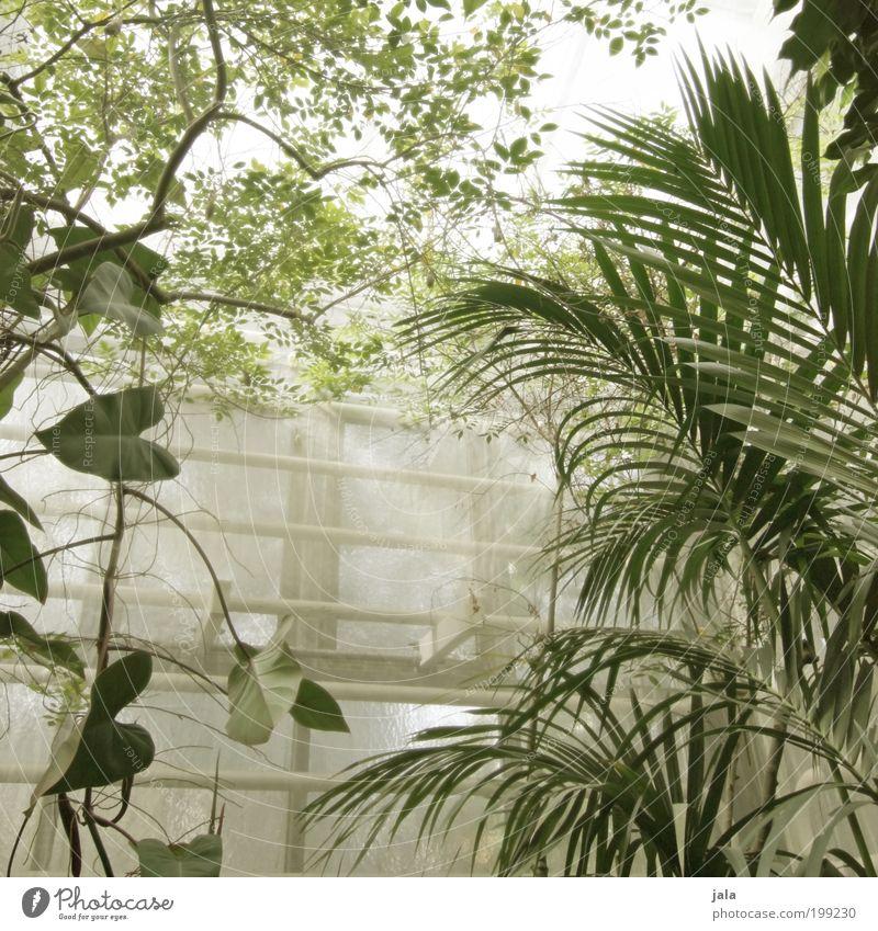 botanic garden [LUsertreffen 04 10] Agriculture Forestry Nature Plant Warmth Tree Flower Leaf Foliage plant Wild plant Manmade structures Building Garden Window
