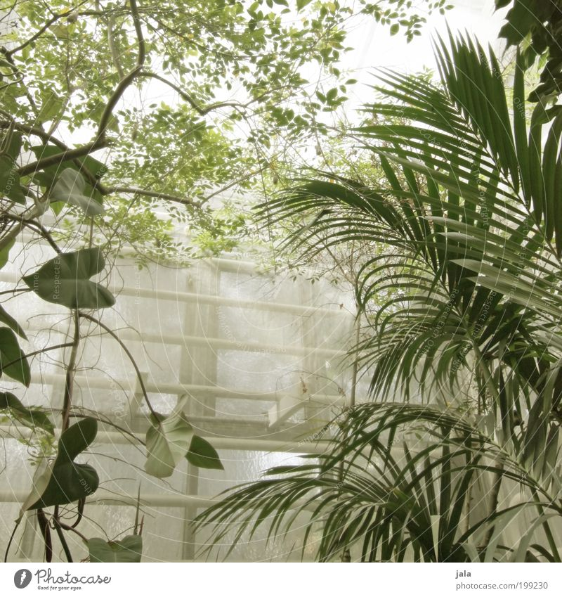 Nature Tree Flower Plant Leaf Window Garden Building Warmth Large Agriculture Manmade structures Damp Forestry Foliage plant Wild plant