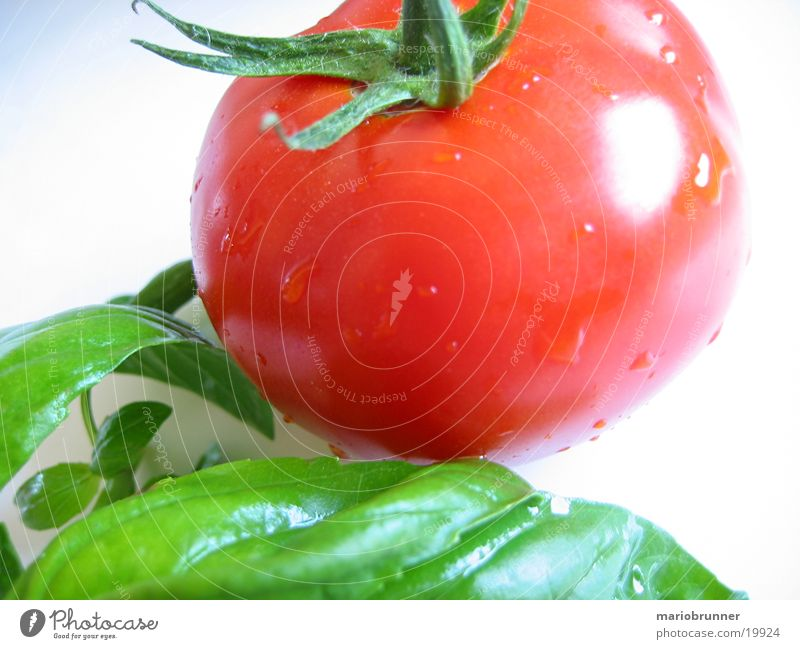 tomato_basil Basil Italy Herbs and spices Green Red Healthy Vitamin Tomato Nutrition
