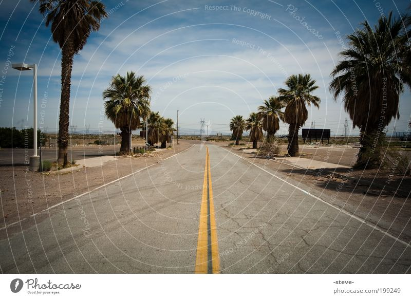 on the road again Nature Palm tree Desert Street Blue Brown Gray USA Nevada Colour photo Exterior shot Deserted Copy Space top Copy Space bottom Day