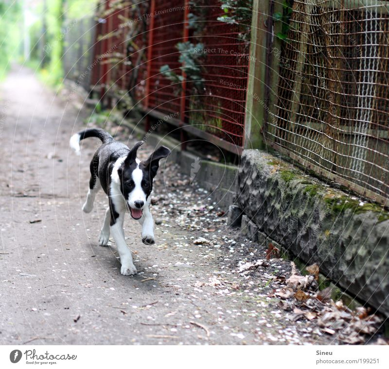 Dog White Beautiful Joy Animal Black Playing Freedom Lanes & trails Movement Happy Funny Baby animal Walking Speed Happiness