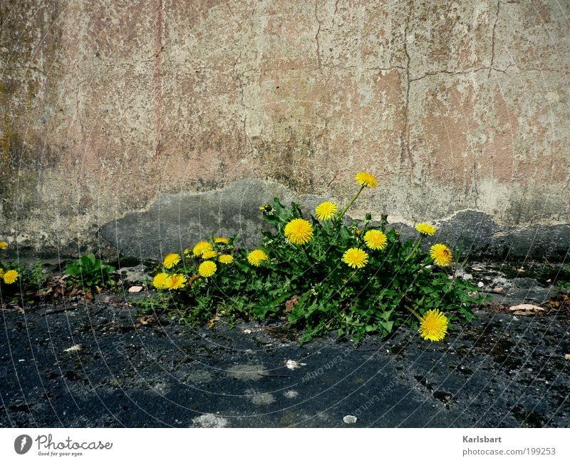 Nature Plant Summer Environment Street Wall (building) Food Movement Lanes & trails Wall (barrier) Stone Style Facade Design Living or residing Lifestyle