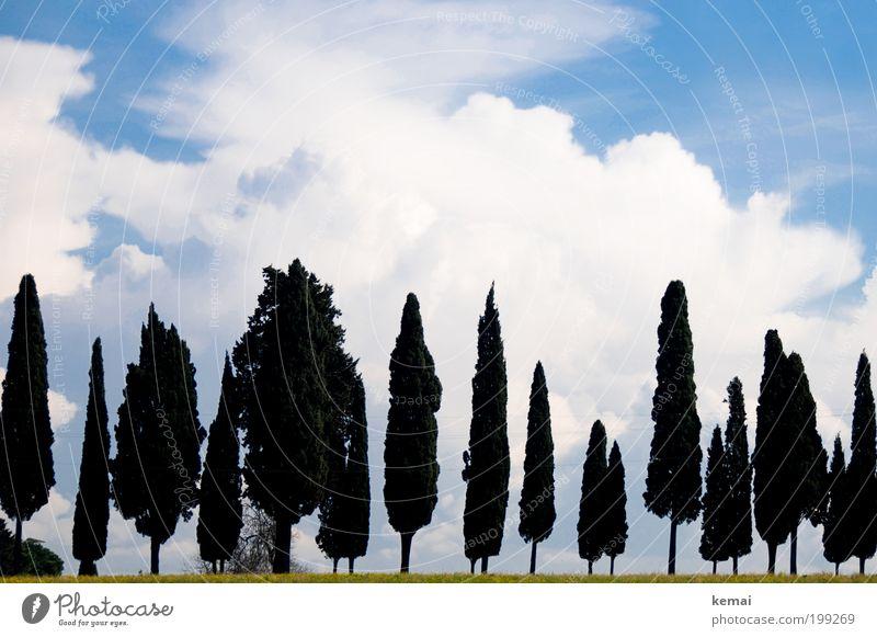 Sky Nature Blue Green Tree Vacation & Travel Plant Sun Summer Clouds Environment Landscape Warmth Grass Garden Park