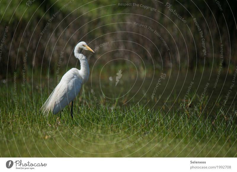 Nature Animal Environment Natural Coast Grass Freedom Lake Bird Wild animal River Lakeside River bank Brook Ornithology Heron