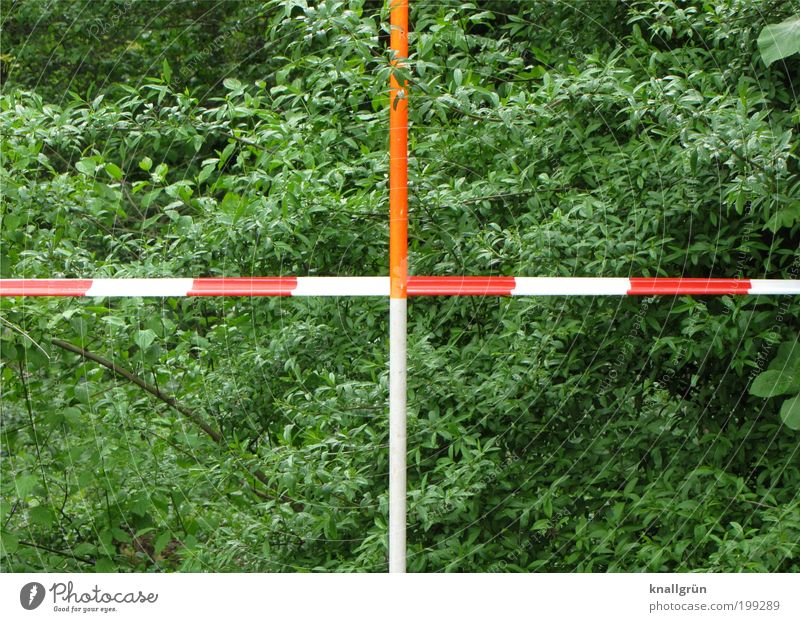 Nature White Green Plant Red Spring Park Planning Environment Safety Bushes Stripe Blossoming Testing & Control Barrier Bans