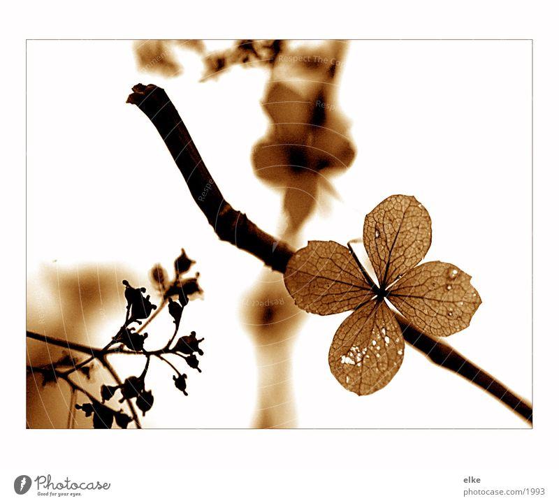 Nature Flower Plant Wood Branchage Elder