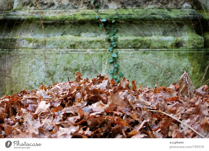 Nature Old Green Plant Calm Leaf Autumn Garden Gray Sadness Park Brown Architecture Weather Environment Earth