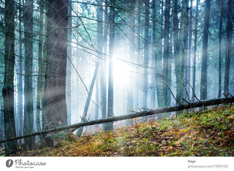 Mysterious fog in the green forest Adventure Sun Wallpaper Nature Landscape Sunrise Sunset Sunlight Spring Summer Autumn Weather Fog Tree Bushes Leaf Forest
