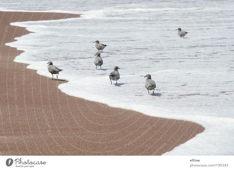 beach walk Nature Landscape Sand Water Beautiful weather Coast Beach North Sea Baltic Sea Ocean Animal Bird Wing Esthetic Wet Natural Clean Moody Safety