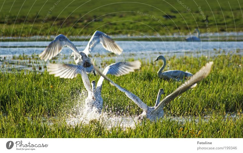 Nature Water Plant Summer Animal Grass Spring Lake Park Warmth Landscape Air Bright Bird Weather Environment