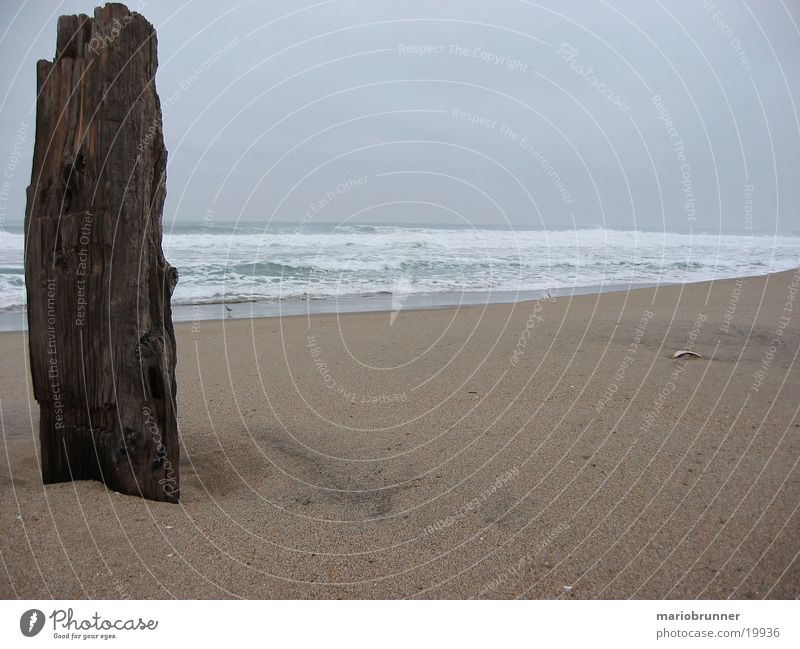 Ocean Beach Loneliness Wood Sand Waves Horizon Empty USA Surf California White crest Pacific Ocean Joist Swell Sandy beach