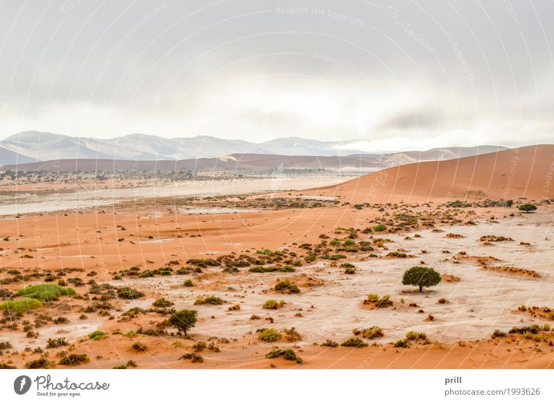 landscape in Namibia Tourism Safari Expedition Mountain Nature Landscape Plant Sand Warmth Grass Bushes Hill Desert Dry Idyll Environmental protection Savannah