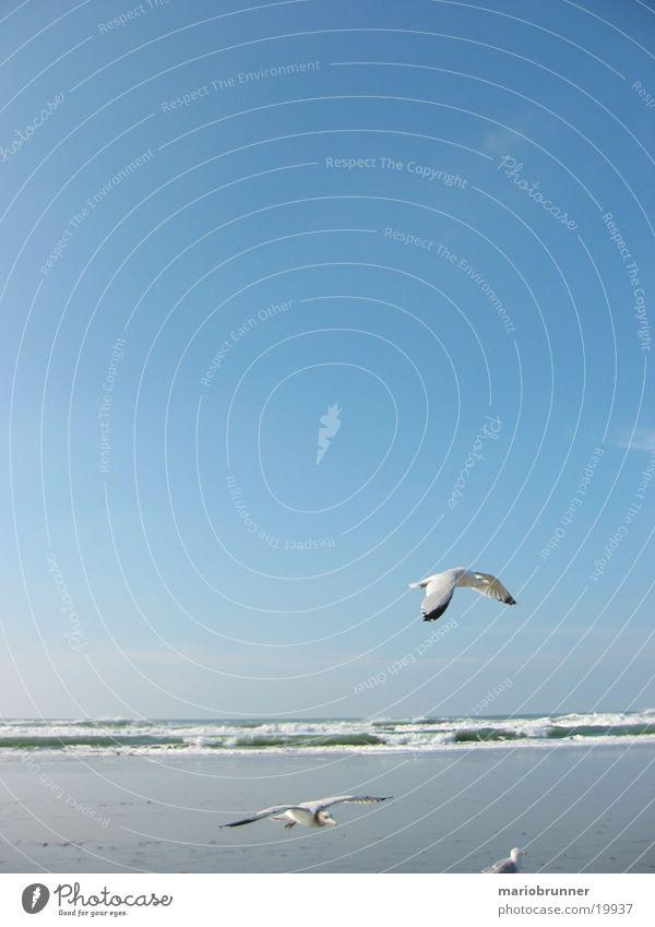 gulls Seagull Sea bird Ocean Beach Waves San Francisco Bird Sand Sky Sun Flying Aviation