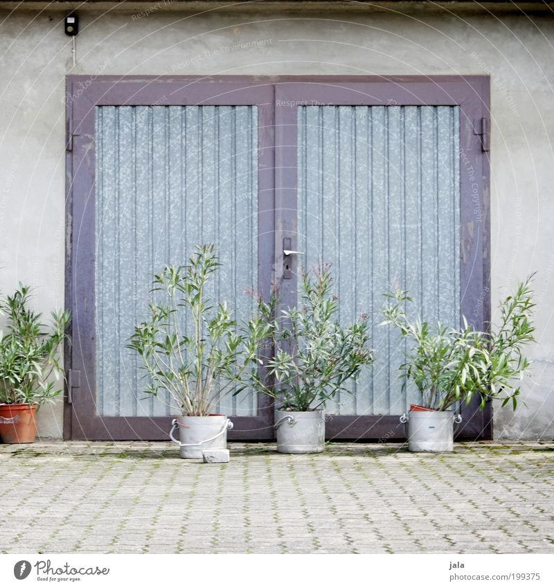 Green Plant House (Residential Structure) Wall (building) Gray Wall (barrier) Building Door Facade Places Simple Foliage plant Pot plant