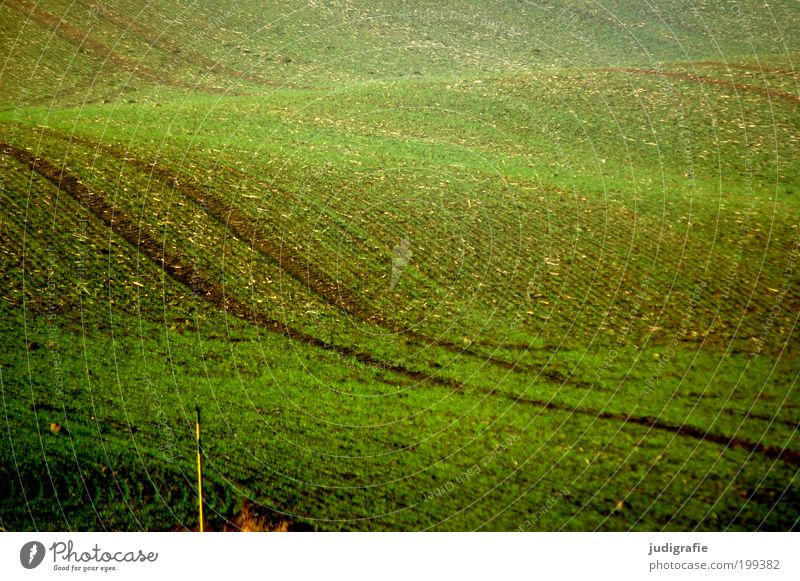 Nature Green Plant Movement Landscape Field Waves Environment Earth Esthetic Growth Soft Natural Hill Agriculture