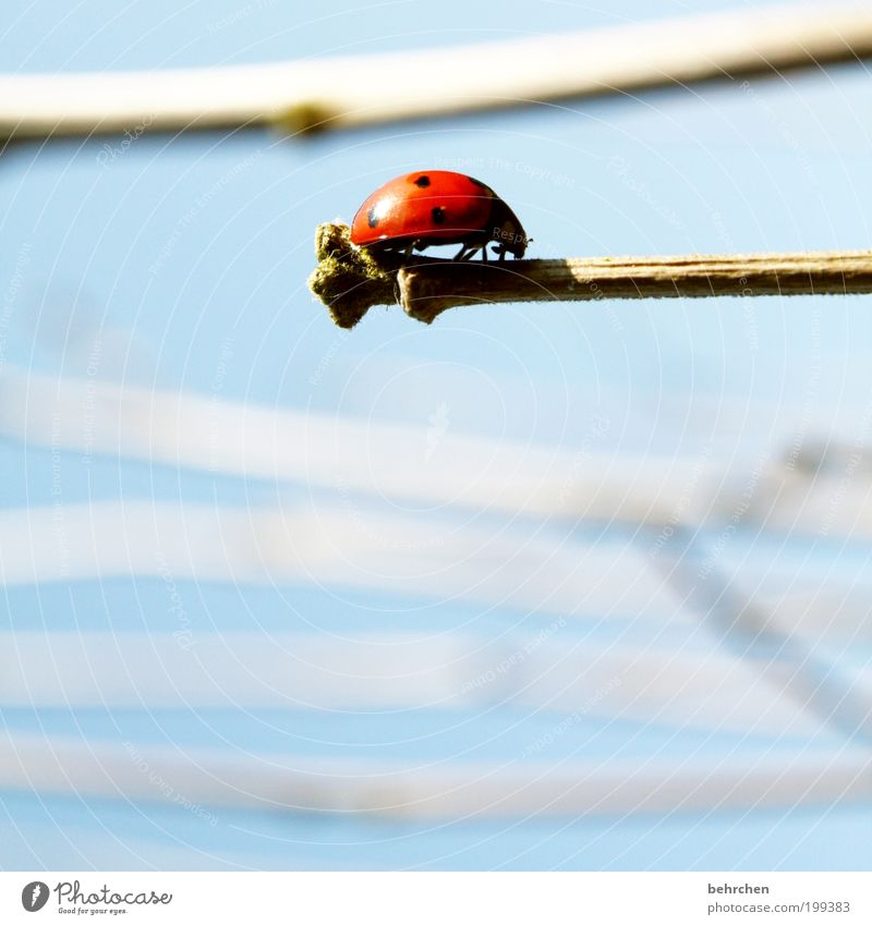 to go on the nap... Sky Plant Animal Beetle 1 Brave Attentive Caution Hope Contentment Branch Ladybird Balance Point Red Crawl Insect Good luck charm