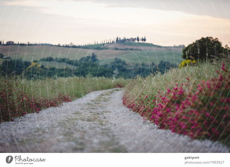 Vacation & Travel Landscape Flower Calm Far-off places Lanes & trails Happy Tourism Going Trip Contentment Hiking Hill Target Athletic Tuscany