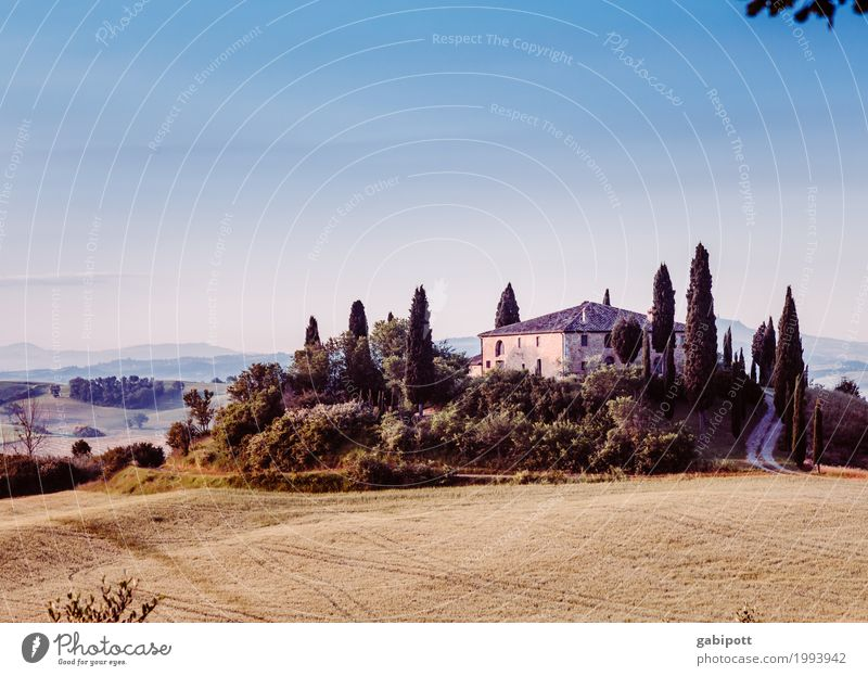 Val d'Orcia Vacation & Travel Tourism Trip Adventure Far-off places Summer vacation Nature Landscape Plant Sunrise Sunset Weather Beautiful weather Tree Meadow