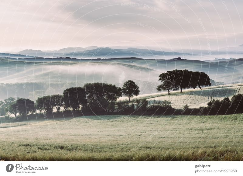 morning freshness Environment Nature Landscape Plant Elements Earth Air Horizon Summer Beautiful weather Fog Tree Meadow Field Hill Italy Tuscany Free Fresh