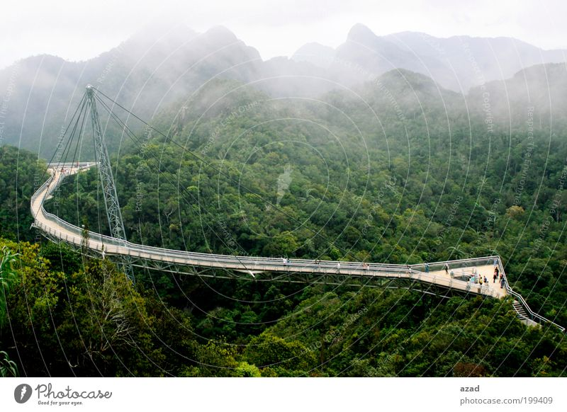bridge Vacation & Travel Tourism Nature Landscape Plant Fog Warmth Tree Forest Mountain To enjoy Hang Colour photo Exterior shot Deserted Dawn