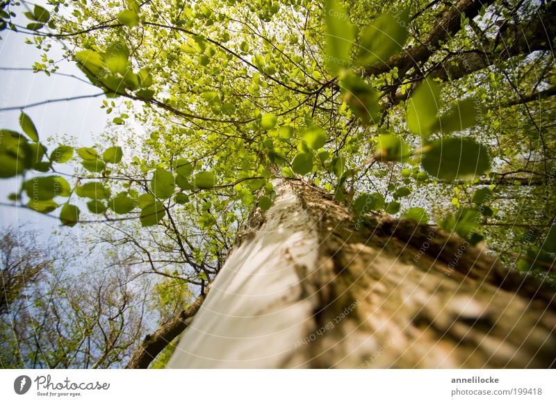 take a deep breath Trip Environment Nature Air Spring Summer Beautiful weather Plant Tree Leaf Wild plant Tree trunk Branch Leaf canopy Treetop Park Forest