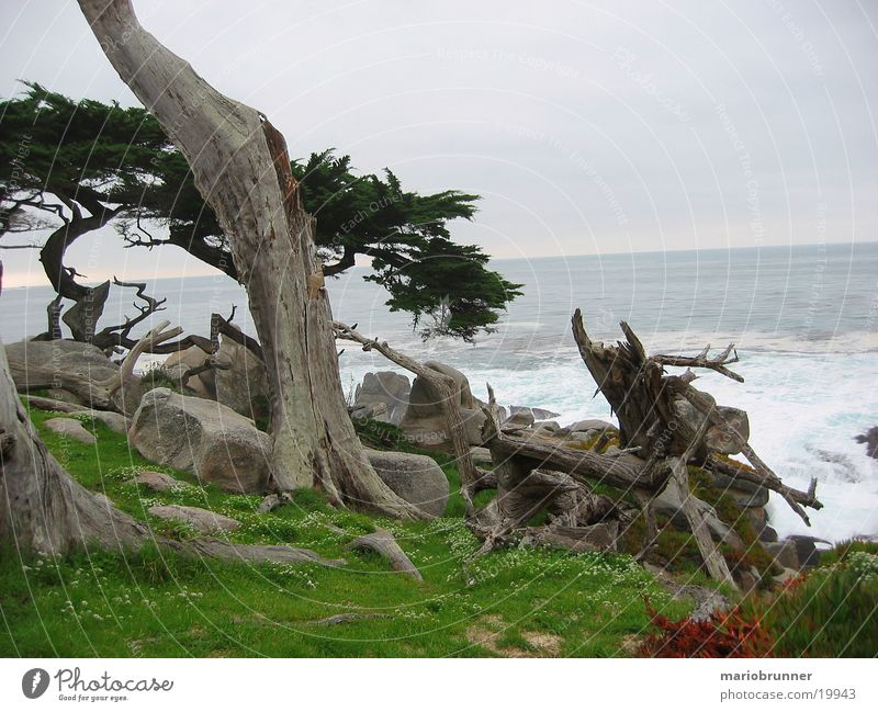 Old Tree Ocean Green Death Grass Stone Coast Rock Mystic Root California Pacific Ocean Cypress Highway One