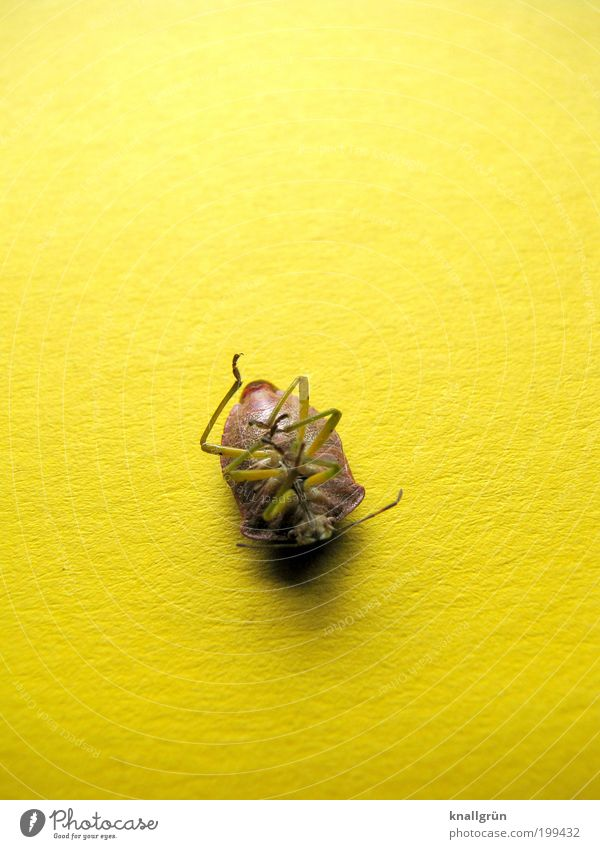 Nature Animal Yellow Emotions Death Sadness Brown Grief Lie Insect Transience Beetle Feeler Stagnating Light Apocalyptic sentiment