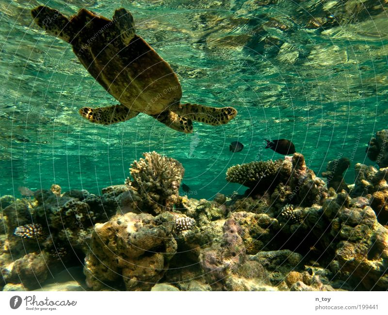coral garden Snorkeling Dive Ocean Island Maldives Nature Water Reef Coral reef Indian Ocean Animal Fish Turtle Free Happy Natural Curiosity Emotions Calm