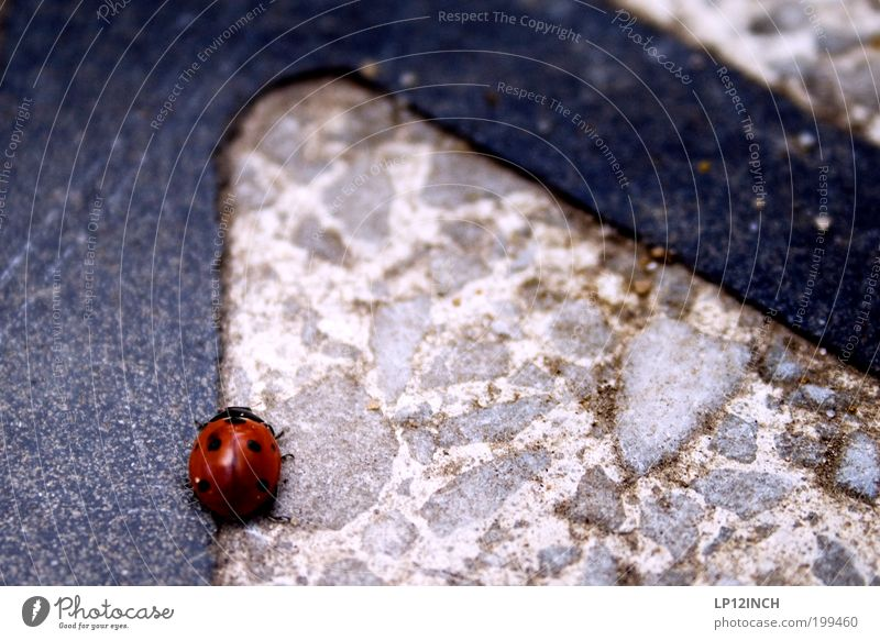 Nature Red Animal Street Movement Environment Lanes & trails Walking Hiking Transport Traffic infrastructure Concern Figure of speech Beetle Ladybird Crawl