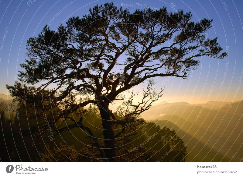 Sunset at the summit Nature Landscape Sky Cloudless sky Autumn Beautiful weather Tree Forest Hill Mountain Peak Contentment Leisure and hobbies Peace Horizon