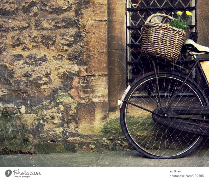 flower macro Style Basket Flower Deserted House (Residential Structure) Wall (barrier) Wall (building) Bicycle Old Retro Unwavering Colour Colour photo