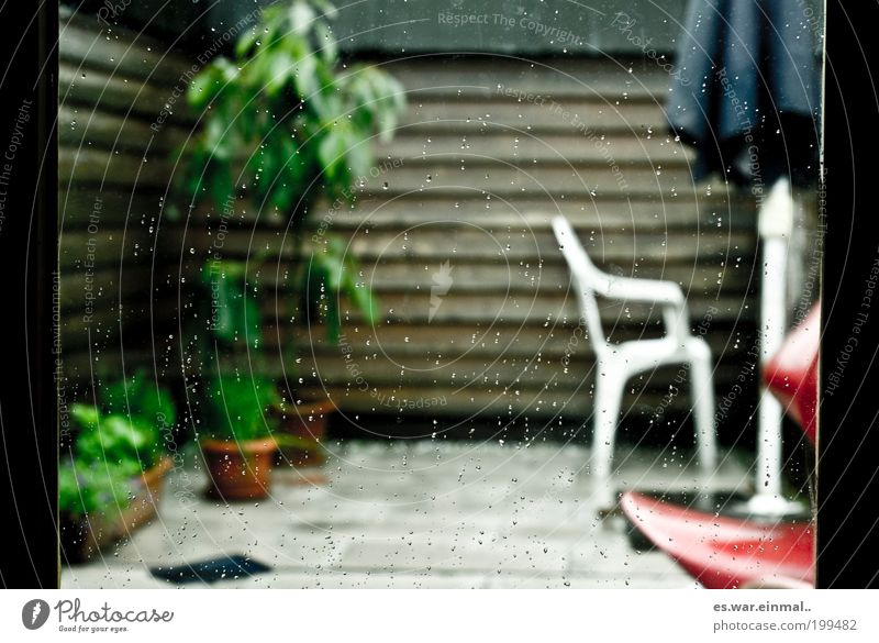Plant Cold Garden Rain Drops of water Wet Esthetic Growth Chair Herbs and spices Furniture Balcony Sunshade Terrace Foliage plant Bad weather