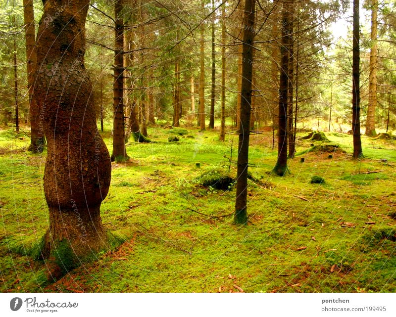Nature Green Tree Calm Loneliness Forest Environment Landscape Spring Moody Brown Earth Large Empty Branch Tree trunk