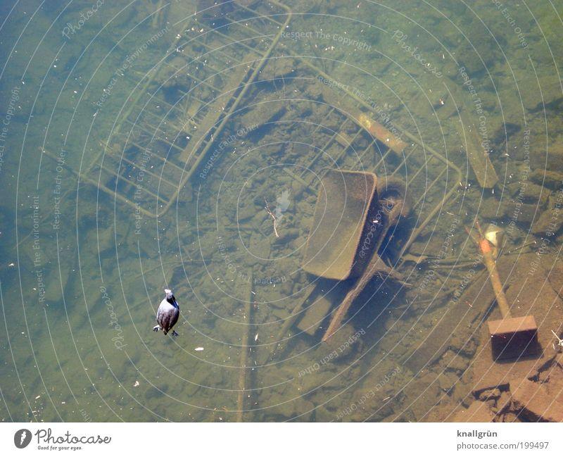 Nature Water Green Black Animal Brown Bird Metal Dirty Environment Gloomy River Broken Change Decline